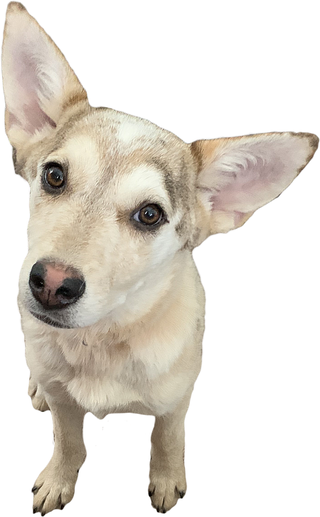 Soul Dog rescue dog from the Four Corners region
