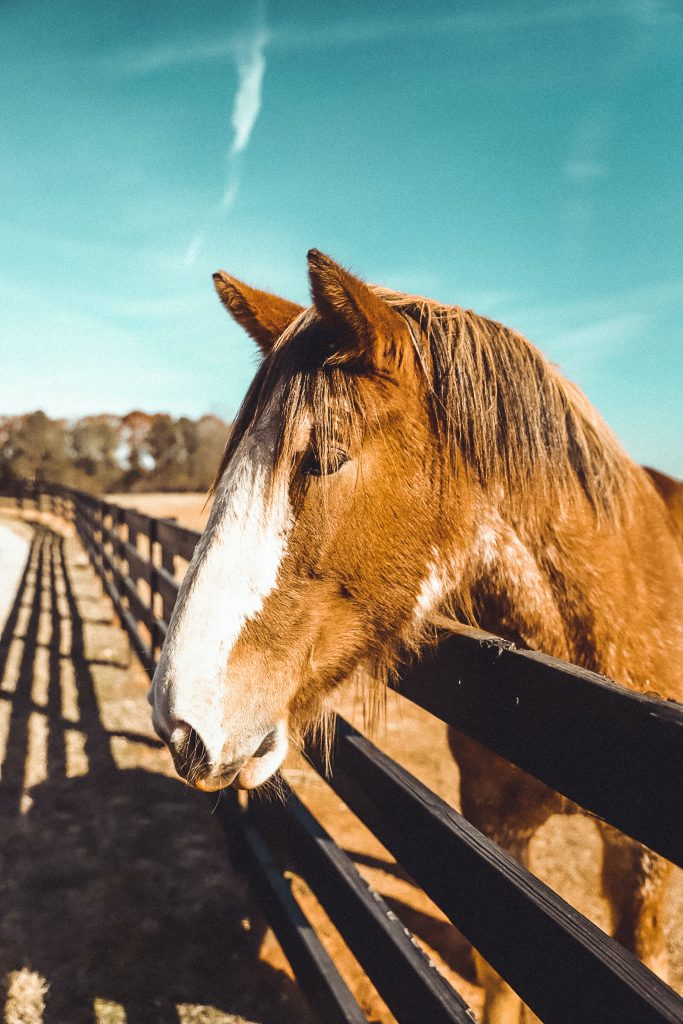 horses need care during an emergency just like pets
